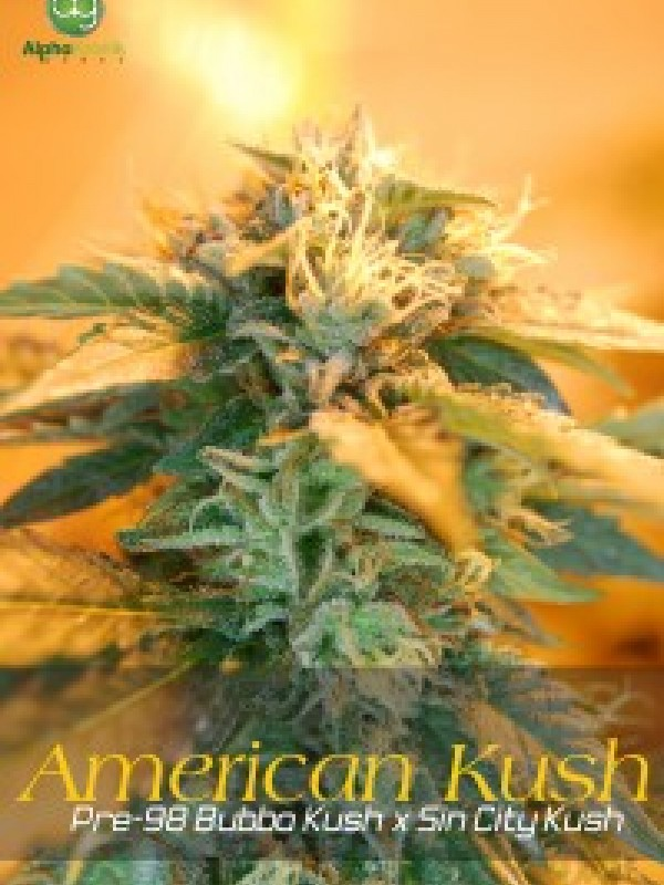 American Kush Regular Seeds