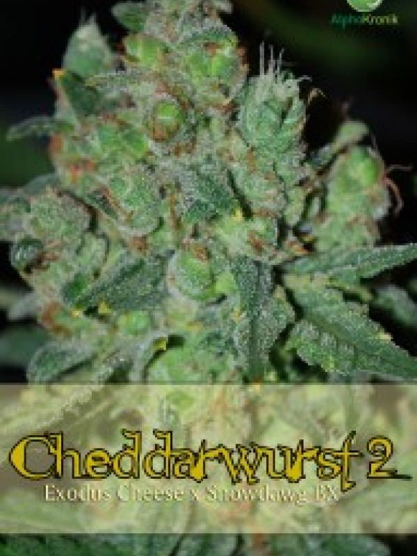 Cheddarwurst 2 Regular Seeds