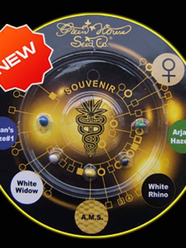 Sativa Indica Mix B Feminised Seeds