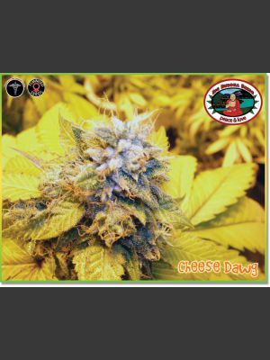 Cheese Dawg Feminised Seeds
