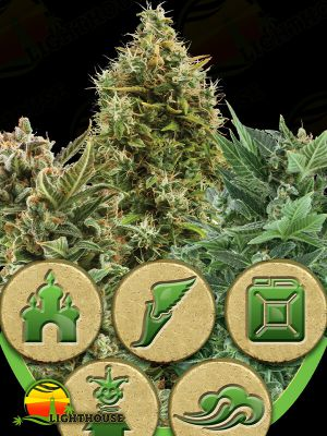 Auto Mix (Royal Queen Seeds)