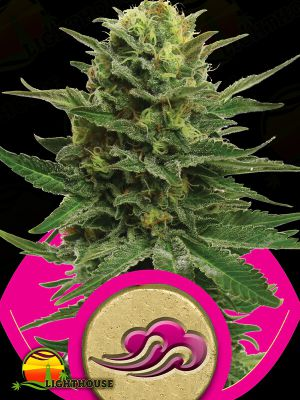Blue Mystic (Royal Queen Seeds)