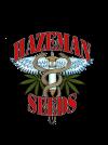 Mystery Girl Regular Seeds