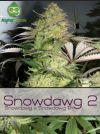 Snowdawg 2 Regular Seeds