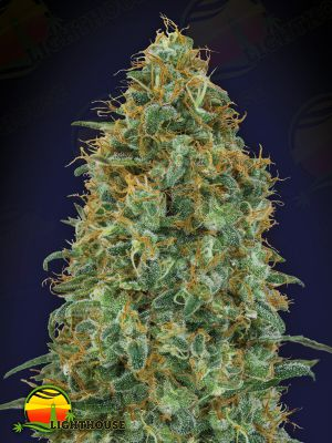Blueberry (00 Seeds)