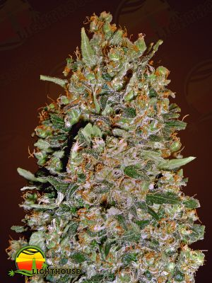 Chocolate Skunk CBD (00 Seeds)