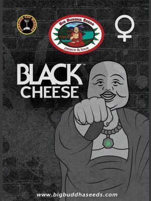 Black Cheese Feminisierte Samen