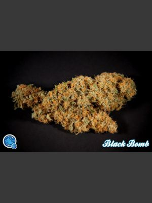 Black Bomb Feminised Seeds