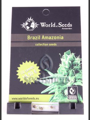 Brazil Amazonia Regular Seeds