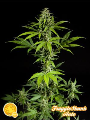 Fraggle Skunk Auto Feminised Seeds