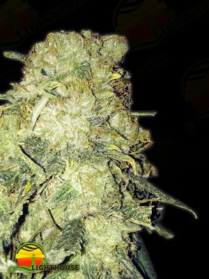 Goldmine (Heavyweight Seeds)