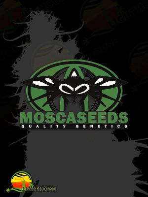 Digital Haze Regular (Mosca Seeds)
