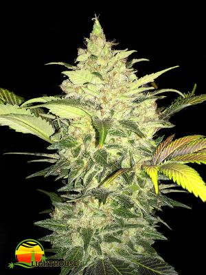 Roof 95 (T.H.Seeds)