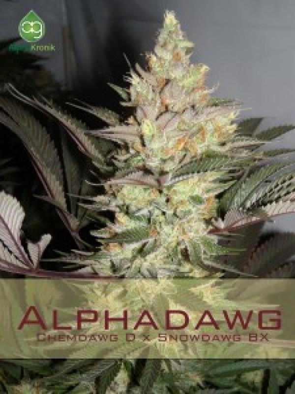 Alpha Dawg Regular Seeds