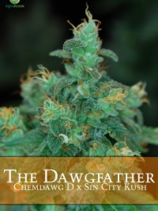 The Dawgfather Regular Seeds