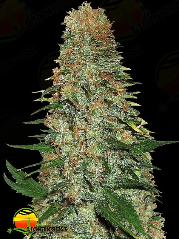 Mango Chutney (Dr Krippling Seeds)