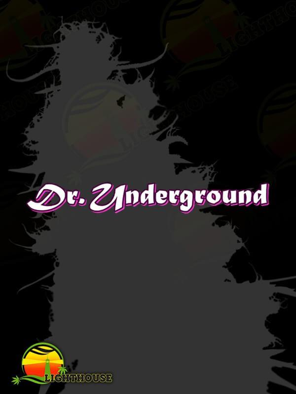 American Beauty (Dr. Underground)