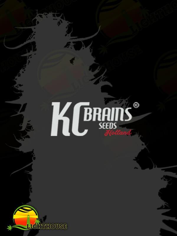 White K.C. (K.C. Brains)