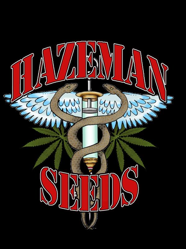 Black Cheese Regular Seeds