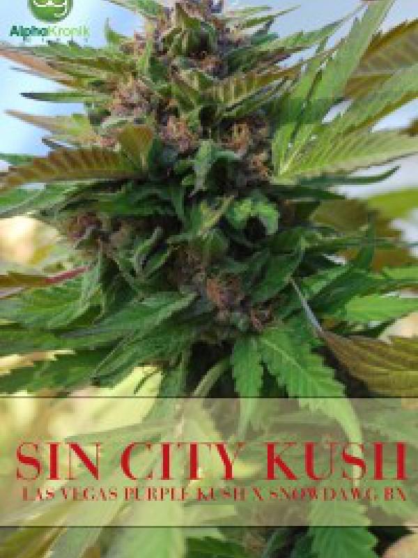 Sin City Kush Regular Seeds