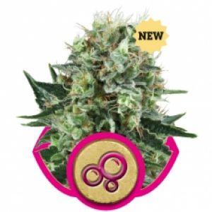 Bubble Kush Feminised Seeds