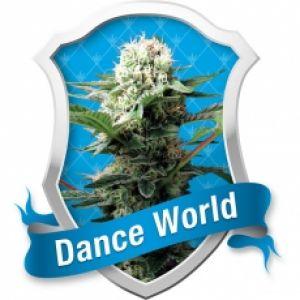 Dance World Feminised Seeds