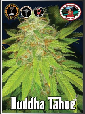 Tahoe Feminised Seeds