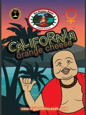 California Orange Cheese Semillas feminizadas