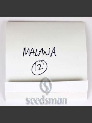 Malana Regular Seeds