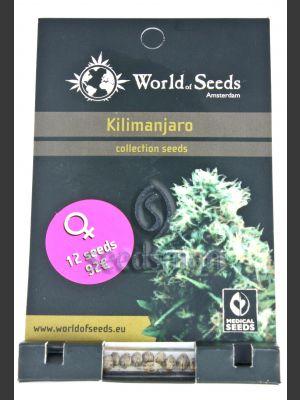 Kilimanjaro Feminised Seeds
