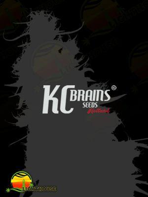 Spontanica (K.C. Brains)