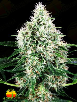Pure Power Plant Auto (White Label Seed Company)