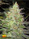 Strawberry Diesel (Holy Smoke Seeds)