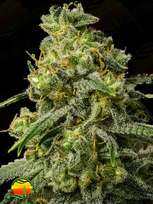 Rosetta Stone Regular (Brothers Grimm Seeds)