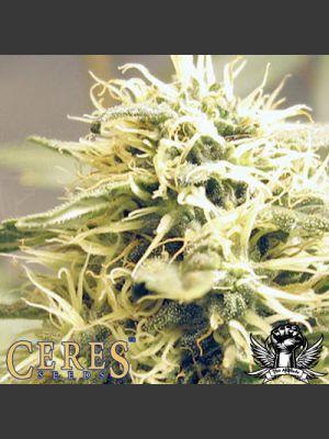 Ceres Kush Feminised Seeds