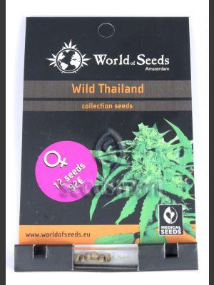 Wild Thailand Feminised Seeds
