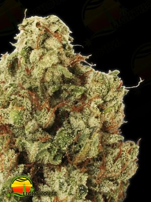 Green Ninja (Heavyweight Seeds)
