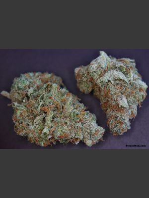 Moonshine Haze Regular Seeds