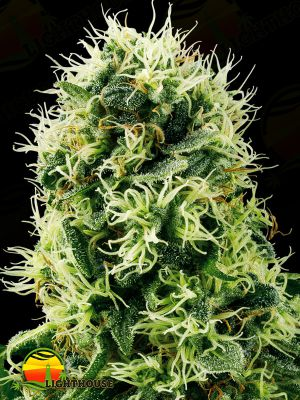 Pure Power Plant (White Label Seed Company)