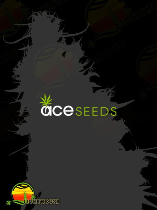Malawi x NL Auto (Ace Seeds)