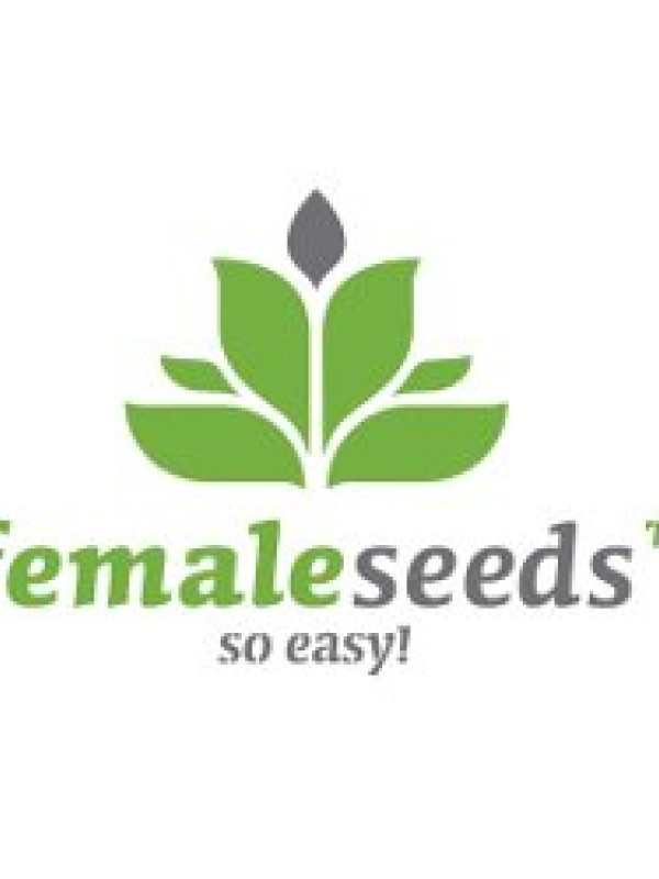 Auto Haze Feminised Seeds