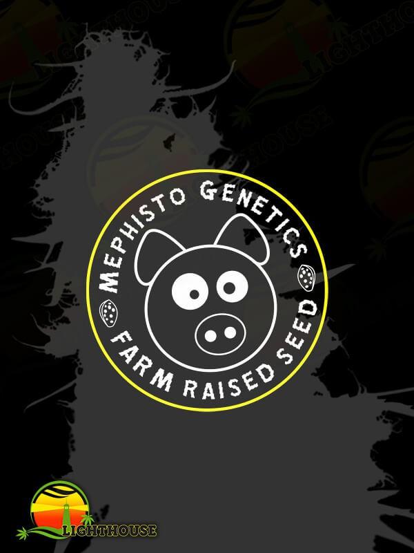 Auto Man Bear Alien Pig (Mephisto Genetics)