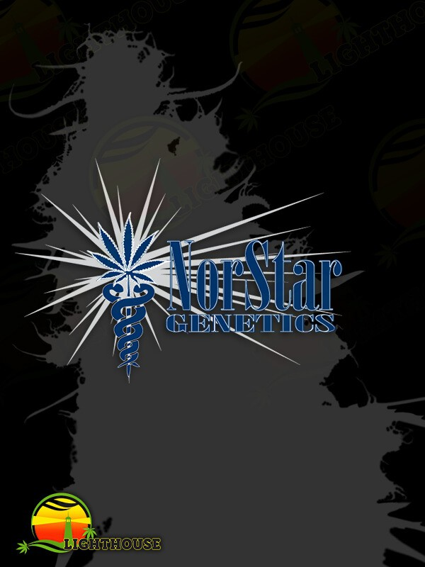 Columbian Thunder Funk Regular (Norstar Genetics)