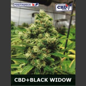 Black Widow CBD Feminised Seeds