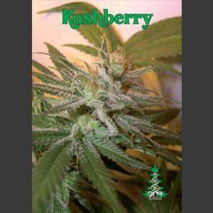 Kushberry Feminised Seeds - 6 seeds