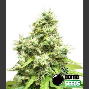 Medi Bomb #1 Feminised Seeds