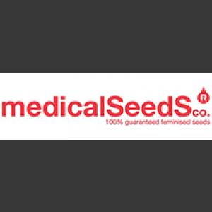 Collection 2 Feminised Seeds