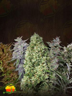 Ace Mix Feminised (Ace Seeds)