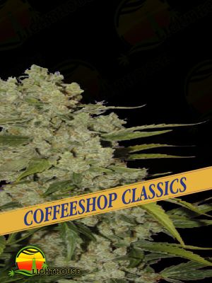 White Widow (Ceres Seeds)