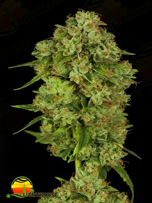 Casey Jones (Devil's Harvest Seeds)
